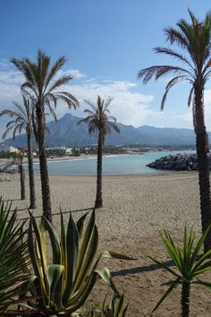 Places to go in Marbella Marbella Beach Club, Marbella Old Town, Hotel Marbella, Malaga Beach, Marbella Puerto Banus, Backpacking Spain, Andalusia, Spanish Holidays, Spain Culture