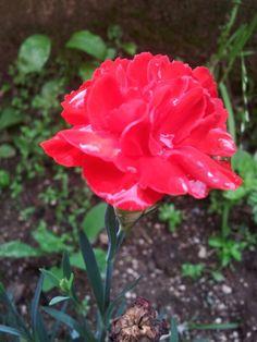 dopo una pioggia leggera il rosso e' ancora piu' bello