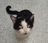 DARYL. Animal ID21909235  SpeciesCat  BreedDomestic Shorthair/Mix  Age2 years 1 month 23 days  SexMale  SizeMedium  ColorBlack/White  Spayed/Neutered   DeclawedNo  SiteOntario SPCA - PEAC  LocationCat Adoptions  Intake Date1/22/2014. ----  Provincial Education & Animal Centre (Branch) 16586 Woodbine Avenue, RR 3 Newmarket, ON L3Y 4W1 phone: 905-898-7122 ext. 306 fax: 905-853-8643 email: peac@ospca.on.ca website: www.peac.ontariospca.ca