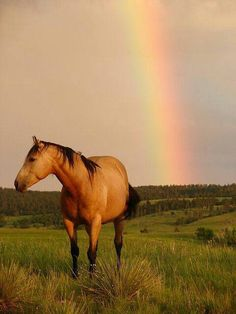 Two things that make this photo so speical: The beautiful horse The awesome background Rainbow Magic, Rainbow Sky, Love Rainbow, Feel Good Pictures, Cool Photos, Rainbow Waterfall, Under The Rainbow, Pinterest Photos, Beautiful Horses
