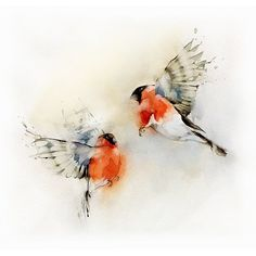 Bullfinch watercolour, the inspiration for one of my back pieces.
