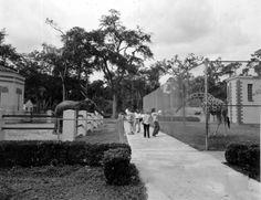 Elephant and giraffe at a Jacksonville zoo - Jacksonville, Florida - 1970