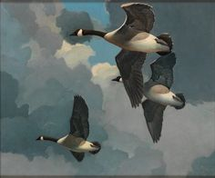 American Paintings — Francis Lee Jaques - The Migration of the Geese Wildlife Paintings, Wildlife Art, Art Canard, Types Of Ducks, Duck Art, Antique Show, Bird Art, Flower Art, Oil On Canvas