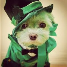 Leprechaun Little.. Happy #stpattys day!!!