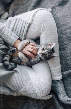 ღღ That's the best... Compfy clothes and a kitten on your lap Cat Lovers, Grey Kitten, Grey Tabby Cats, Cat Couch, Cuddle Cat, Grey Things, Winter Cat, I Love Cats, Cute Cats