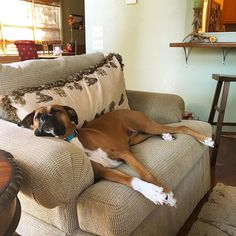 """208 Likes, 4 Comments - Lucy The Boxer (@iamlucytheboxer) on Instagram: """"I'm on vacation this week at the lake. As you can see, it's pretty stressful up here. About to go…"""""""