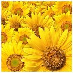 """Fototapet """"Floarea soarelui''- vlies"""