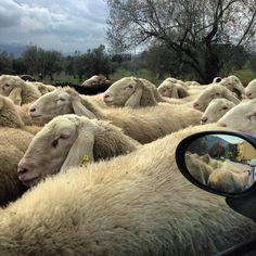 Sulle nostre strade, incontri inaspettati… Foto Anna Maria Manzo