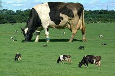 gigantic cow - magic milk