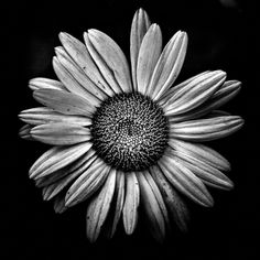 Backyard Flowers In Black And White 13