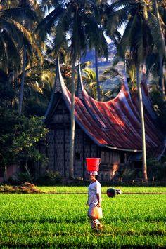 This photo from Sumatera Barat, Sumatra is titled 'Back to Home'. Minangkabau, Thinking Day, Paradise Island, Archipelago, Capital City, Southeast Asia, Cambodia, Nepal, Beautiful Places