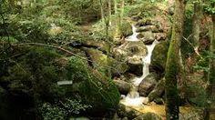 Bildergebnis für wolfsschlucht bad kreuzen Plants, Plant, Planting, Planets