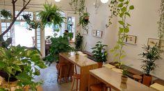 Jardin Cafeteria - Jardin Plantas e Flores