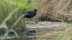Via Zeelandia photo album. Birds, Album, Friends, My Style, Animals, Amigos, Animales, Animaux, Bird