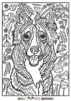 Free printable Border Collie coloring page available for download. Simple and detailed versions for adults and kids.