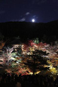Kyoto 京都の紅葉