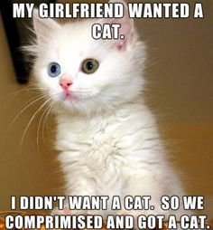 The Best Memes of 2014 | Suburban Men