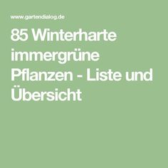 Fabulous  Winterharte immergr ne Pflanzen Liste und bersicht