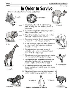 A great science worksheet on animal adaptations. Animal Science, Science Biology, Teaching Biology, Science Lessons, Science Education, Life Science, Forensic Science, Higher Education, Physical Education