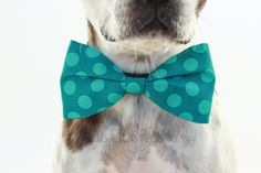 Turquoise Polka Dot Dog Bow Tie  Dog by LittleBlueFeathers on Etsy, $13.95
