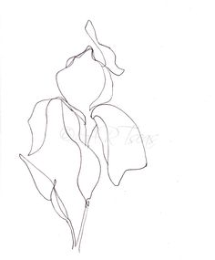 "Minimalist Botanical Pencil Illustration/Drawing  Archival Art Print ""Blume"" Also available in 10 x 13 inch Giclee Art Print"