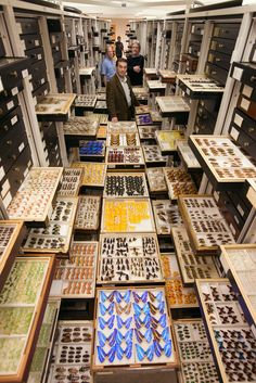 Entomology Collections, National Museum of Natural History - BACKSTAGE DOS MUSEUS