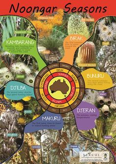 Bush Tucker Plants for your Home Garden Aboriginal Art Symbols, Aboriginal Art For Kids, Aboriginal Education, Indigenous Education, Aboriginal History, Aboriginal Culture, Indigenous Art, Naidoc Week Activities, Harmony Day