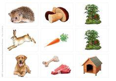 Кто что ест и где живет Montessori, 1, Teddy Bear, Education, Games, Toys, Activities, Human Body Parts, Farm Animals