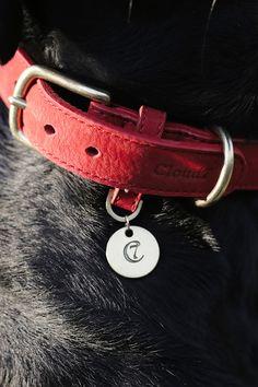 20+ bästa bilderna på Cloud7 Dog Products | hundar