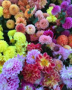Get them while they are here this Saturday @aquidneckgrowers!!!! Our dahlias are beaming with pride right now! #dahliaseason #love…