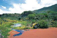Laguna de páramo cubierta por el helecho acuático Azola filiculoides de coloración rojiza y la zona de ronda por musgos y chusques.