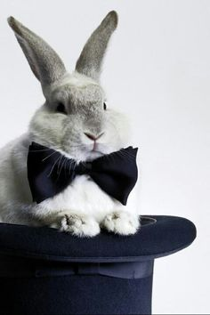 About the Rabbit out of the hat... It's time to upgrade our wardrobe.