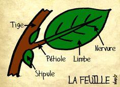 Sauvages du Poitou: la feuille