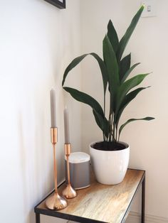 kitchen plants copper candle sticks and sonos speakers! kitchen plants copper candle sticks and son Ficus Pumila, Kitchen Plants, Bathroom Plants, Shade Plants, Cool Plants, Plant Design, Garden Design, Sonos Speakers, Palmiers