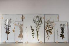 Studio Maarten Kolk & Guus Kusters / Herbaria