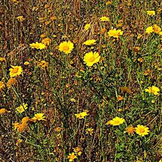 Wall paper inspiration #flowers #wild #nature #field #meadow #bloom #yellow #rural #countryside #countryliving #estate #home #wallpaper #mcintoshnesbit #pic #design #designer #inspiration #photo #interiordesign #interiordesigner #interior #instadaily #instagram #instalike #decor