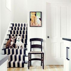 Dogs on black & white striped stairs