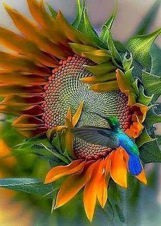 Colibri en flor. Hummingbird in flower.