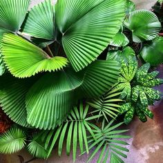 Photos and Videos Back Gardens, House Plants, Plant Leaves, Palm, New Homes, Photo And Video, Videos, Instagram, Photos