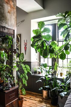 5 Tips for Keeping Houseplants Alive this Winter, Design*Sponge Room With Plants, House Plants Decor, Interior Plants, Interior Exterior, Indoor Garden, Indoor Plants, Decoration Plante, Decorating Bookshelves, Decorated Jars