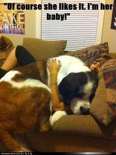 Big dogs that think they are lap dogs. I wish I had a Saint Bernard! Funny Dogs, Cute Dogs, Funny Animals, Cute Animals, Baby Animals, Wild Animals, Love My Dog, Funny Dog Pictures, Animal Pictures