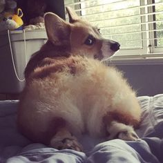 "The ""Look Back At It"" Sploot 