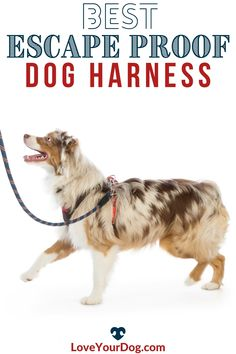 Looking for the perfect escape proof dog harness for the furry Houdini in your life? We review our favorite picks, comparing durability, cost, and more! Potty Training Tips, Best Dog Training, Brain Training, Big Dog Little Dog, Big Dogs, Puppies Tips, Dogs And Puppies, Train Information, Homemade Dog