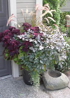 Gorgeous grey, green, & purple container garden. Dusty miller, coleus, fountain grass and more. \ From http://jim-groundcover.blogspot.com/