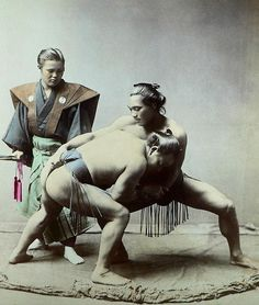 Japanese vintage picture : sumo wrestlers