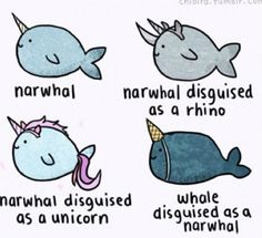 Looks like a unicorn, but it might just be a narwhal disguised as a unicorn.