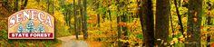 Seneca State Forest in W.Virginia.