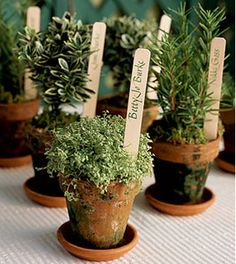 Potted plants in VARIETY of pots for favors? ♥ I think I like this idea best...