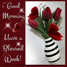 Good Morning Have A Blessed Week monday good morning monday quotes good morning quotes happy monday monday quote happy monday quotes good morning monday Cute Good Morning Quotes, Good Morning Sister, Good Morning Thursday, Good Morning Prayer, Good Morning Inspirational Quotes, Morning Morning, Morning Blessings, Good Morning Picture, Morning Humor