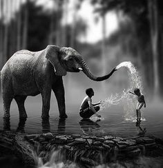 Black and White Photography People: Get Professional Looking Pictures With These Tips – Black and White Photography Animal Photography, Amazing Photography, Nature Photography, Elephant Photography, Pinterest Photography, Fotografia Pb, Animals Beautiful, Cute Animals, Cool Photos